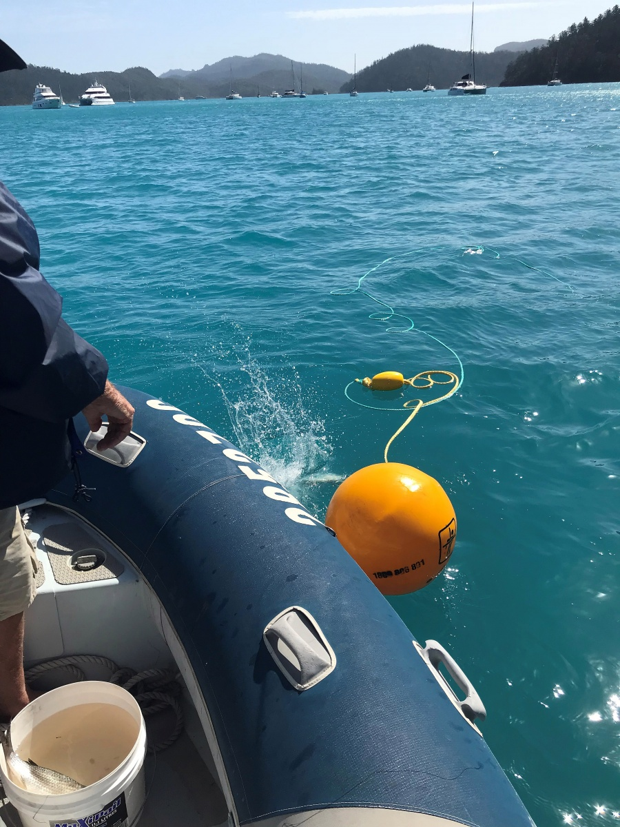 shark attack whitsundays cull qld