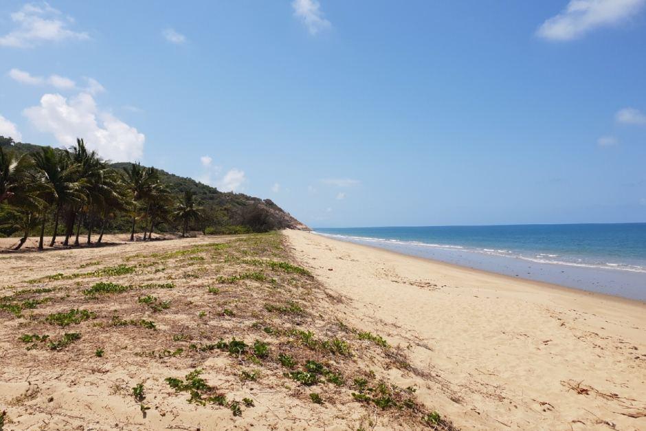 wangetti beach - toyah cordingley - cairns woman murdered