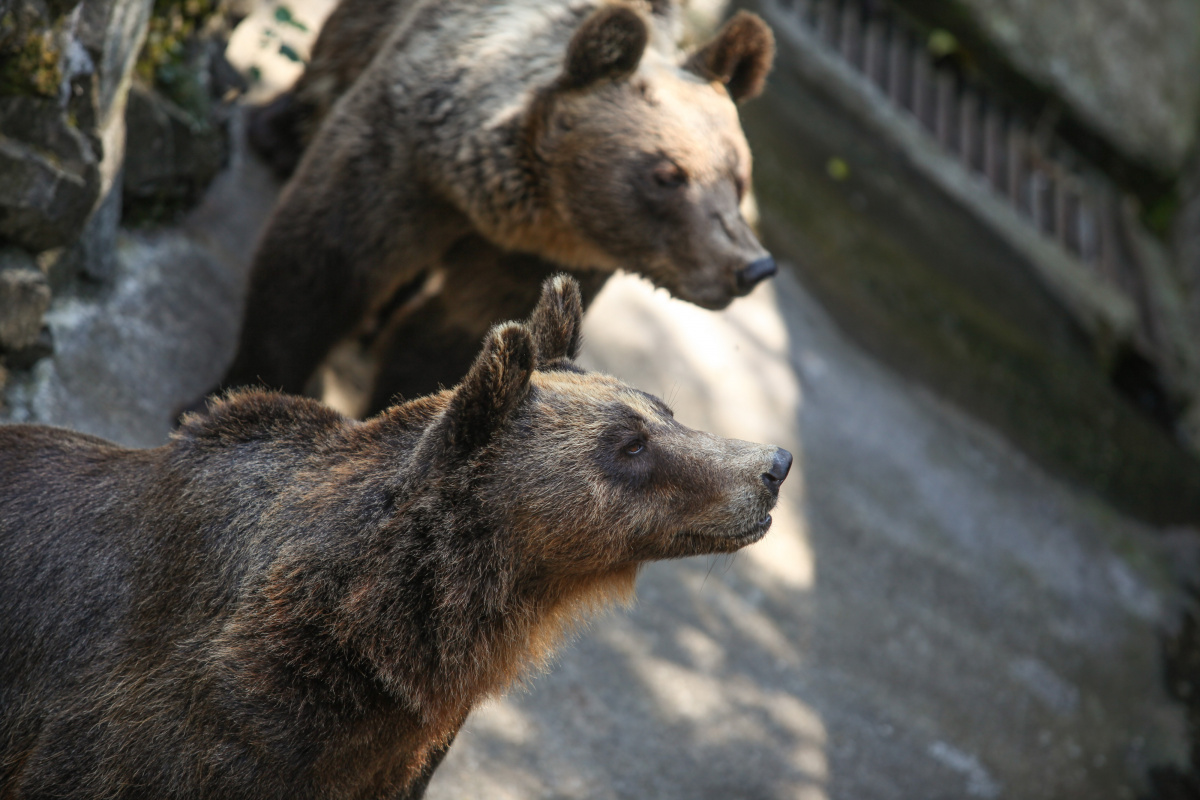 Grizzly Bear Kills Mum And Baby In Canada The New Daily