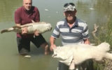Fish deaths Murray-Darling