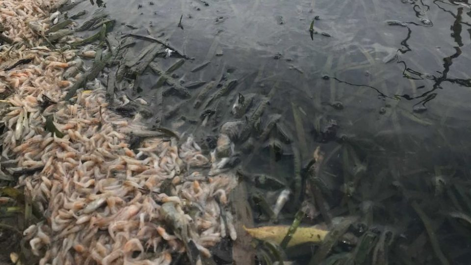 Mass fish kills study ordered by federal government