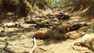 dead horses alice springs