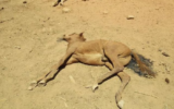 dead horse alice springs