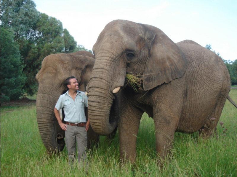 simon-duffy-elephants
