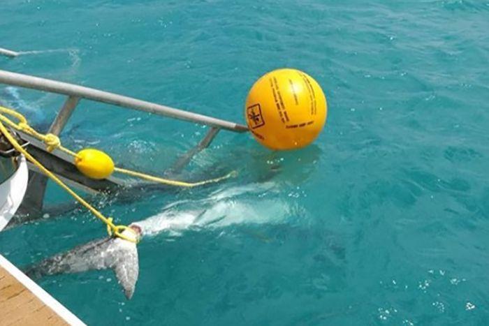 cid-harbour-shark-attacks