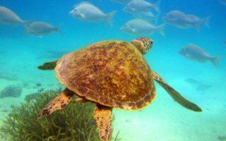 great barrier reef unesco