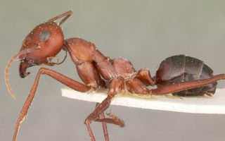 scientists create robot using ant navigation