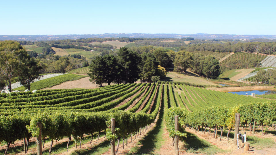 A winery in the Adelaide Hills.
