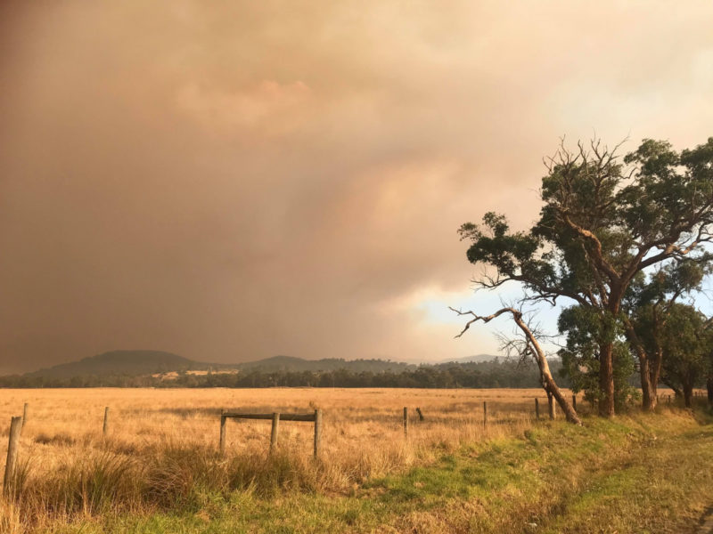 tonimbuk-state-forest-bushfires