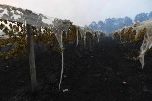 victoria bushfires bunyip