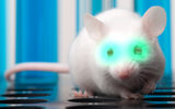 An eye injection enables mice to see infrared light.
