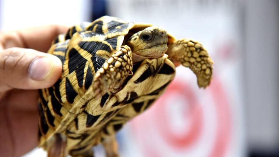 More than 1500 exotic turtles and tortoises abandoned at Manila