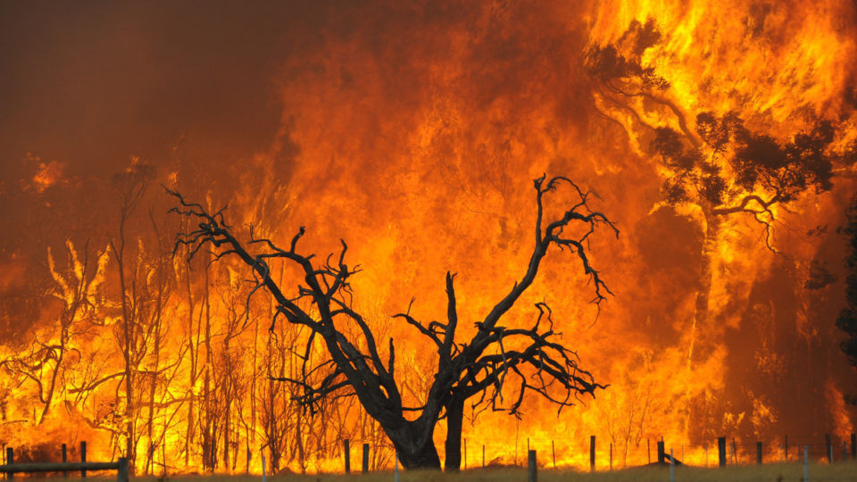 bunyip-state-forest-fire