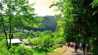 Picture of Japanese forest