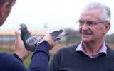 pigeon record sale