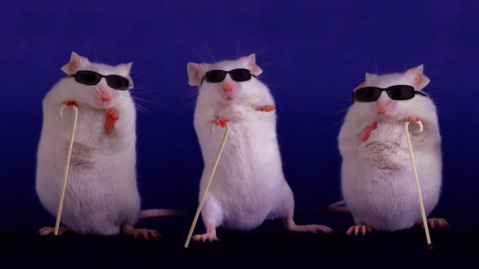 Three blind mice see again