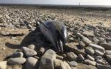 dead dolphin france