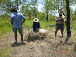 Croc Egg Harvest