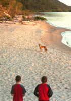 Fraser Island dingoes children
