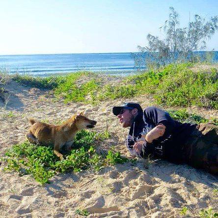 Fraser Island Dingoes