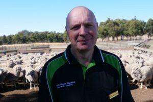 sheep shearing world record