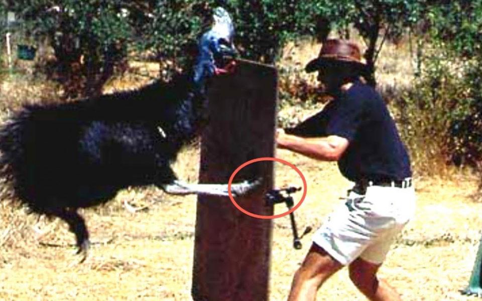 American Auto Finance >> Australian cassowary kills Florida bird breeder