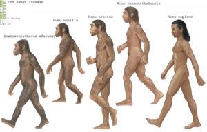 homo-erectus-genes-exercise
