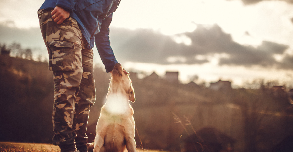 A dog getting a pat.