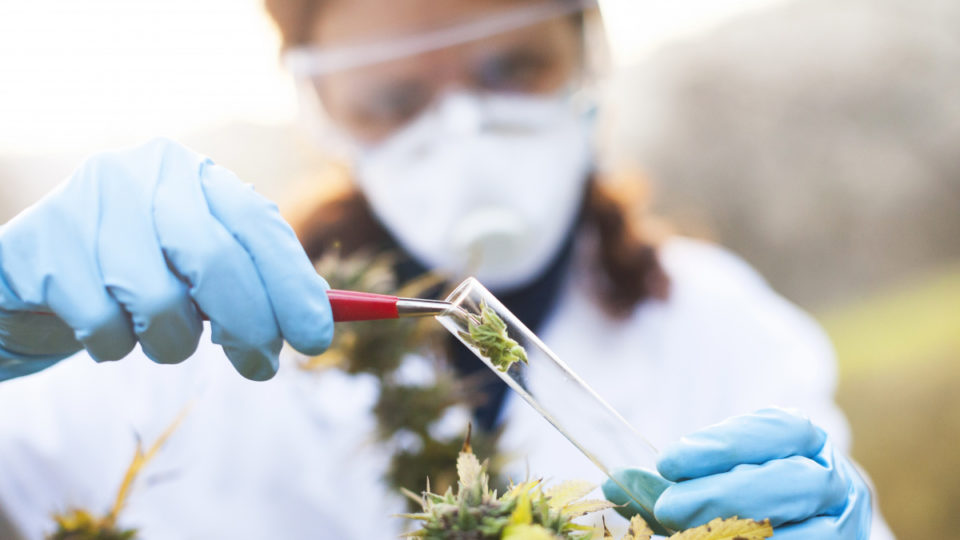 The national trail is looking at the effect of medicinal marijuana.