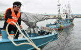 japan whale hunting