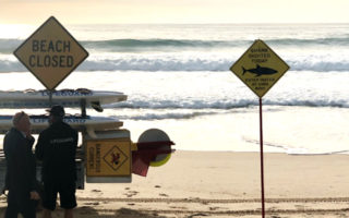 manly beach shark attack