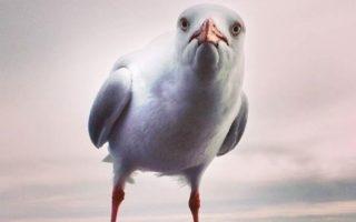 seagulls e coli