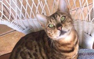 vet mistake euthanise cat