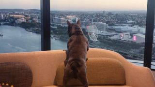 luxury hotels pets australia