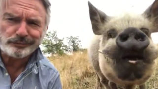 Sam Neill with pet pig