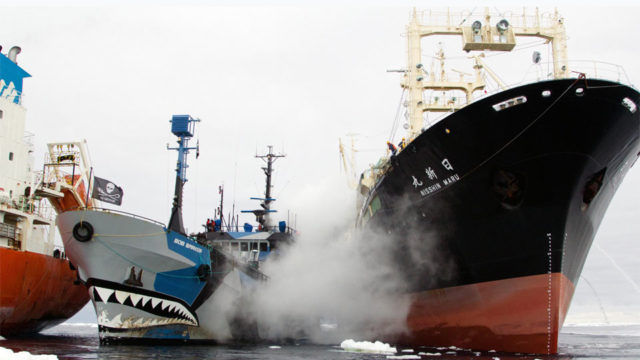 Sea Shepherd documentary Defend, Conserve, Protect poses big question about activists