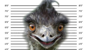 eno emu north carolina