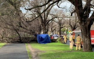 woman dies tree princes park