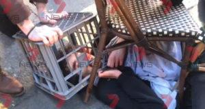 sydney knife killer charges