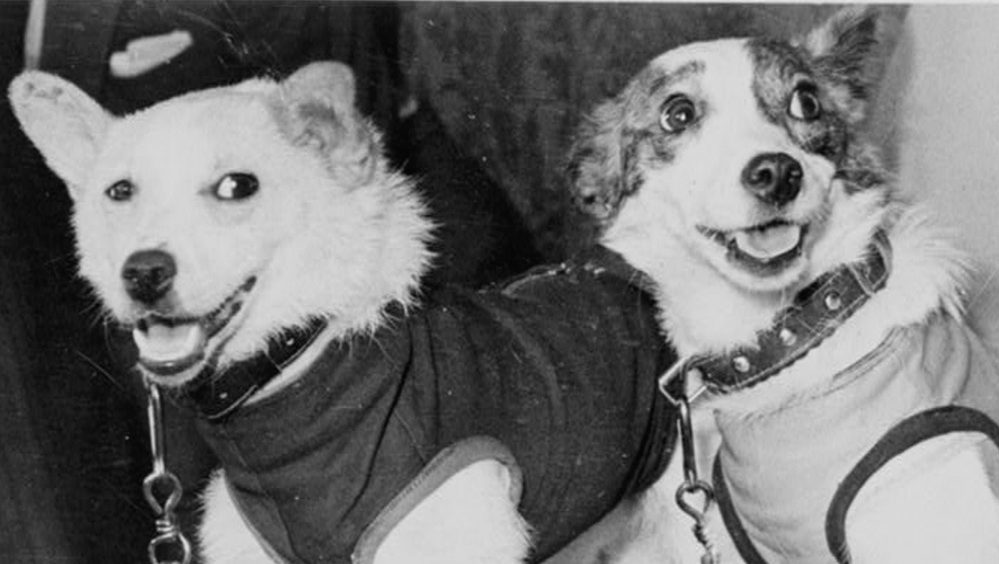 Belka and Strelka spent a day in space in 1960.