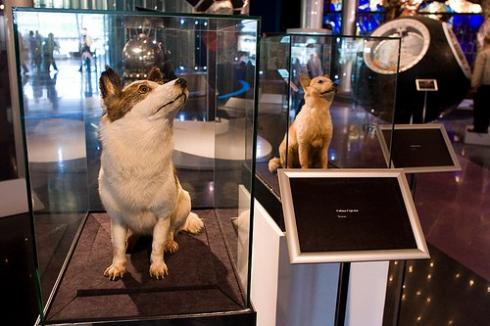 Belka and Strelka have been preserved via taxidermy. Photo: Best Russian Tour