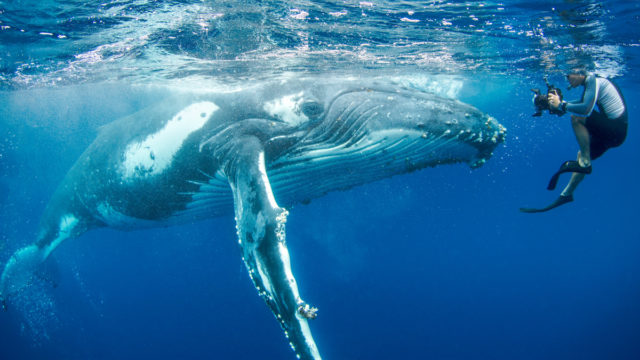 Up close and personal with a whale in the waters off Tonga.
