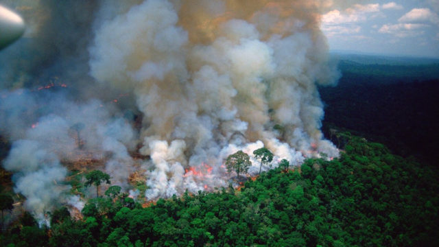 Record-breaking fires in Amazon rainforest shot from space