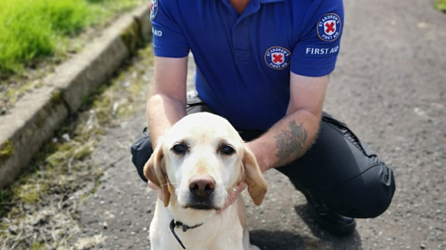 UK owner uses CPR skills to save pet dog