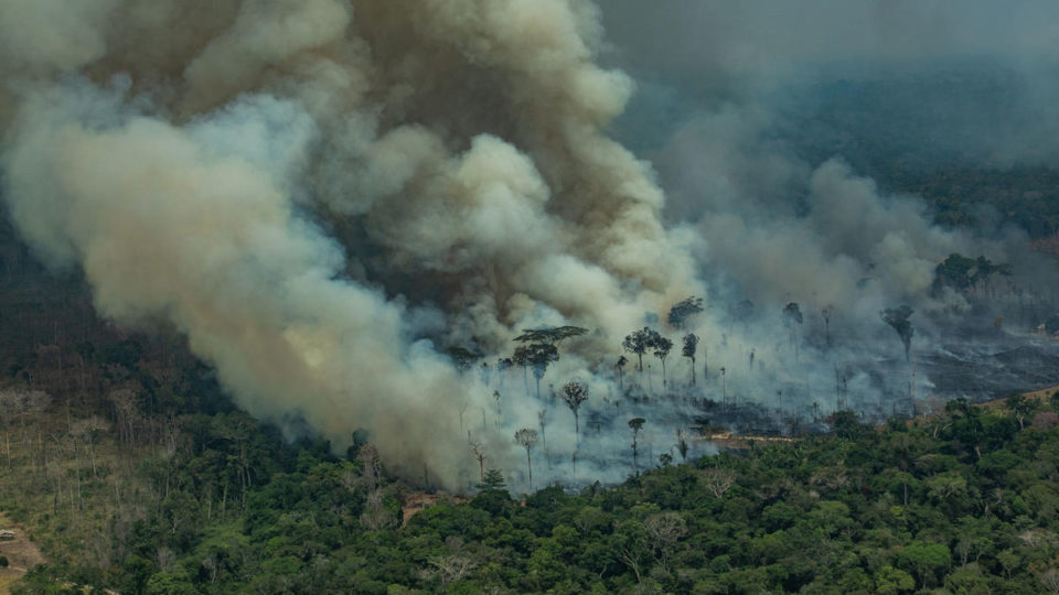 The Amazon rainforest has been burning for almost four weeks now.