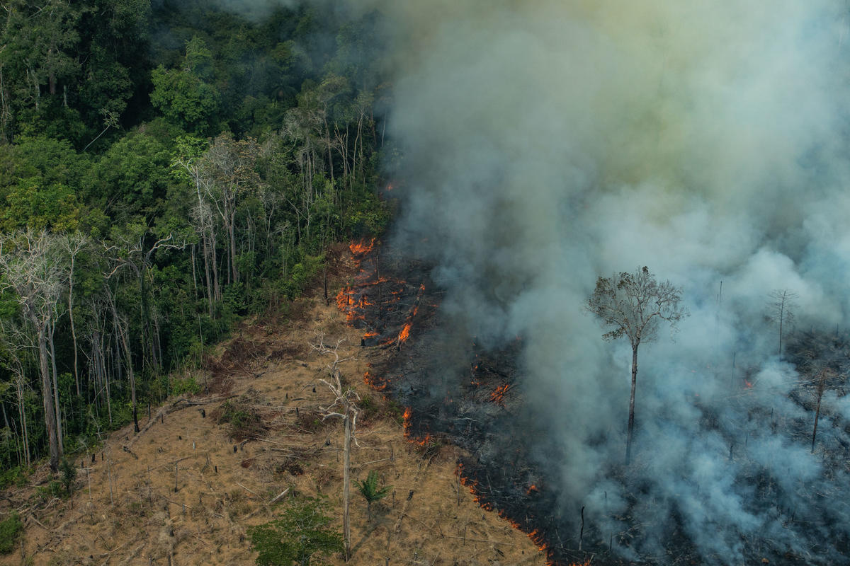 More than 75,000 fires have erupted since the start of the year. Photo: Greenpeace