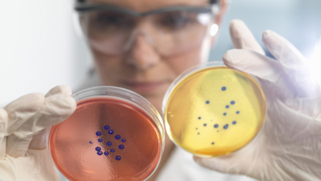 Australia's first case of drug-resistant superbug prompts warning to travellers