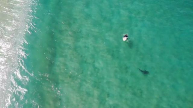 Drone shows massive shark hunting surfer in New South Wales