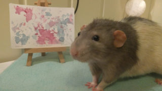 rat-artist-watercolour-paintings