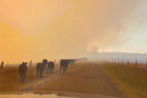 nsw bushfires houses